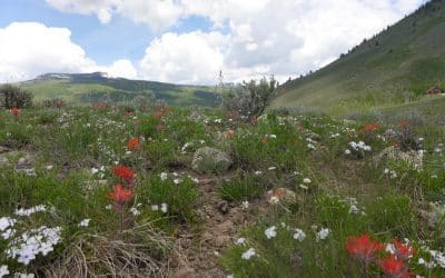 TBD Round Mountain, Crested Butte ~ Under Contract