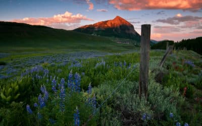 6 Best Places to Find Wildflowers in Colorado